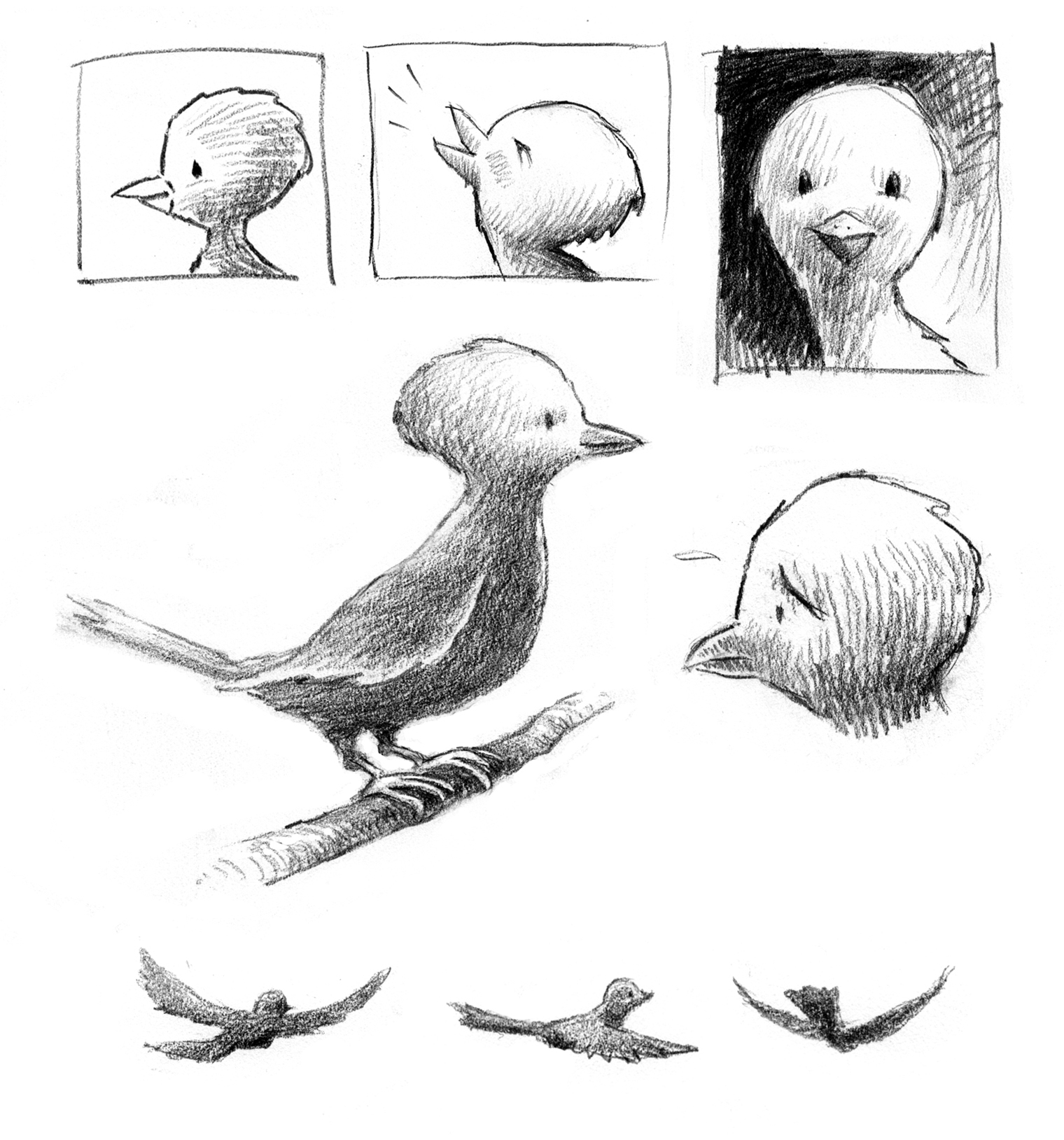 sketches for the birds tom lichtenheld